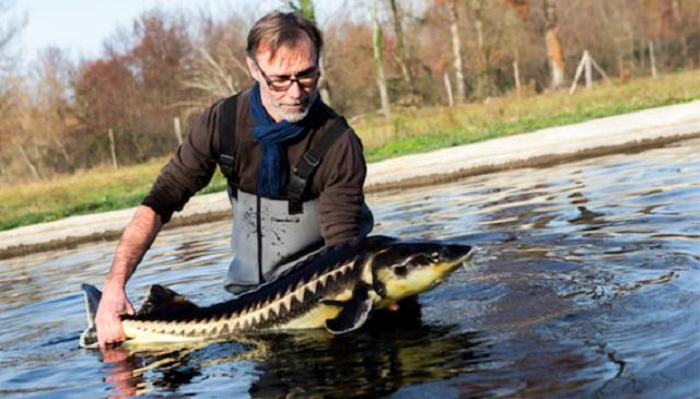 Laurent Deverlanges, Producteur de caviar – Copyright © Caviar de Neuvic