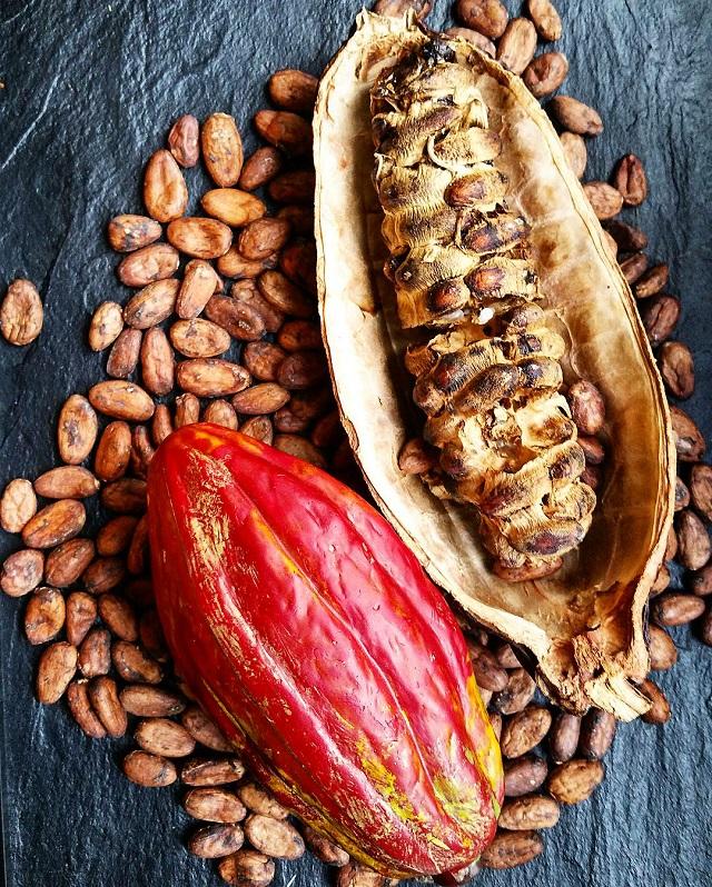 Cabosse de cacao, maison Jacot Chocolatier, région Jura et Trois-Lacs – Copyright © Gratinez